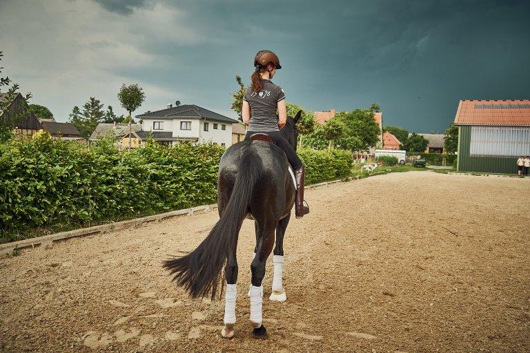 Pferde DePeyrac